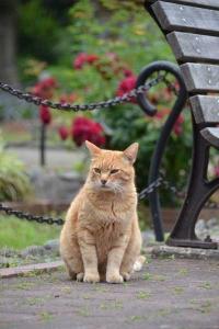 Flower Garden Cat