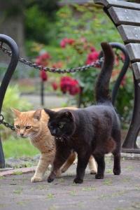 Flower Garden Cats