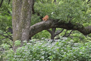 Cat Up in a Tree above Hydrangea
