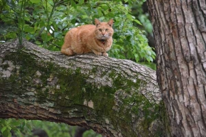 Cat Up in a Tree