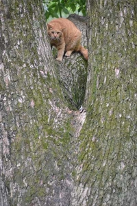 Cat About To Descend The Tree