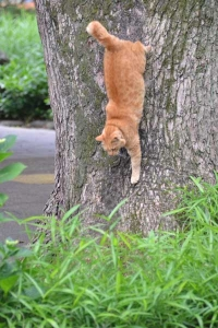 Cat Descending The Tree Trunk