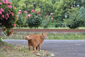Cat and Flowers (Azalea, Rose)
