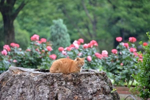 Tree Stump Cat and Flowers (Rose Garden)