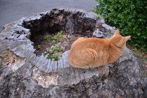 Tree Stump Cat