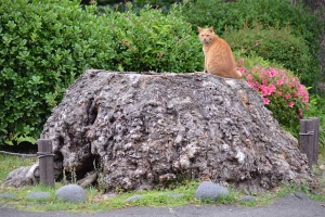 Tree Stump Cat and Flowers