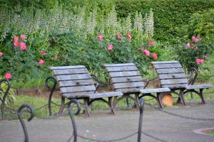 Cat and Benches (Rose Garden)