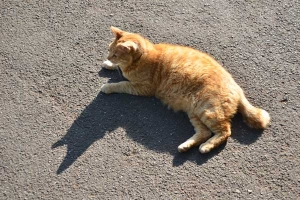 Lying Cat and Its Shadow