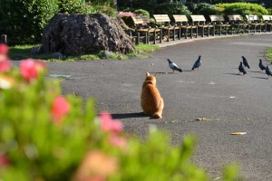 Cat, Pigeons and Azalea Pink