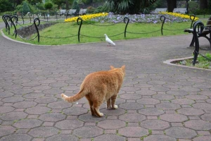 Cat Waving Its Tail