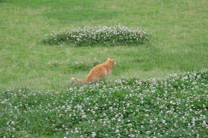Cat and Flowers (Clover)