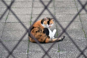 Cat In Grid Patterns