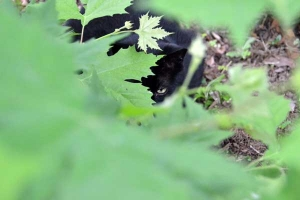 Cat Peeking Through Green Leaves