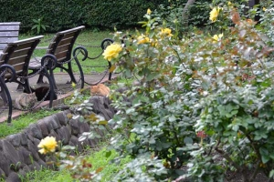 Summer Cats, Benches and Roses
