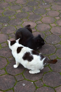 A Black and White Cat and Her Mate