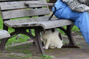 Cat Under The Bench