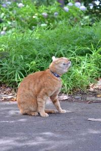 Cat Shaking Head