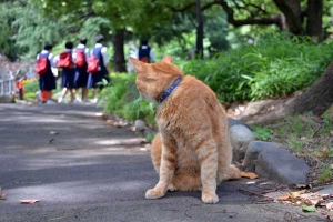 Wayside Cat Looking Behind