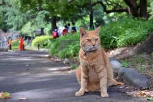 Wayside Cat