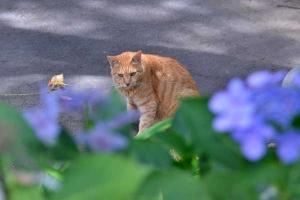 Cat and Hydrangea