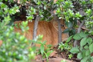 Cat Watching You
