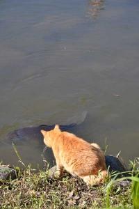 Cat and Carp