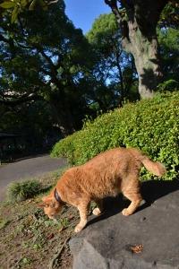 Cat Avoiding Hot Sunlight
