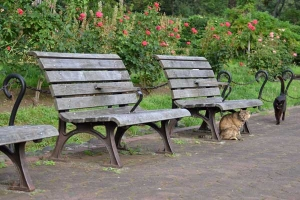 Cats and Rose Garden Benches