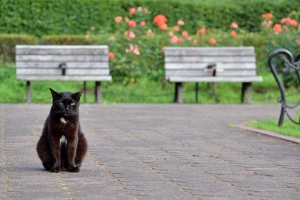 Cat and Rose Garden Benches