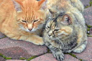 Cats Together