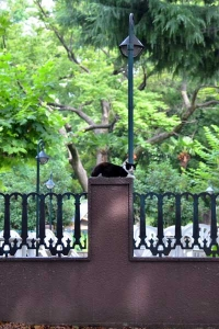 Cat Sitting On a Fence Pillar