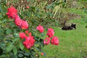 Cat In The Rose Garden