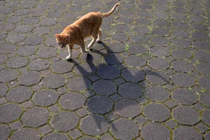 Cat and Its Shadow