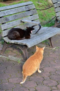 Bench Cats