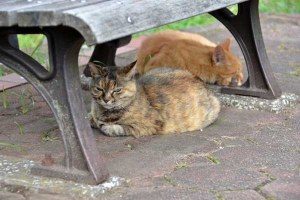 Cats Under The Bench