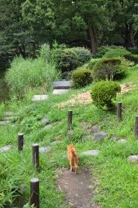 Cat Walking Away