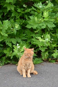 Cat and Summer Green