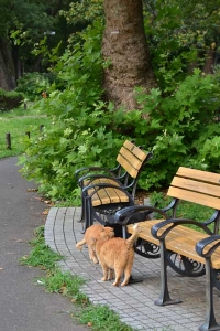 Cats, Benches and Platanus Tree