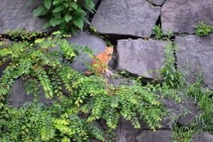 Cat On The Stone Wall