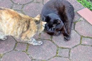 Cat Duo Greeting