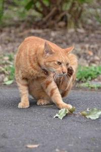 Cat Iching