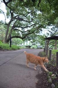 Cat and Kusunoki Tree