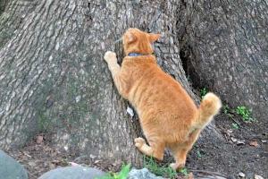 Cat Scretching The Tree