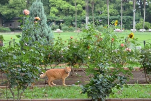 Cat In The Flower Garden