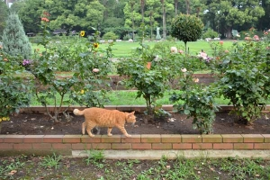 Cat Walking In The Flower Garden