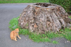 Cat and Tree Stump