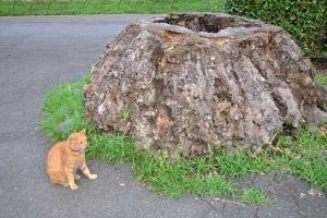 Cat and Tree Stump