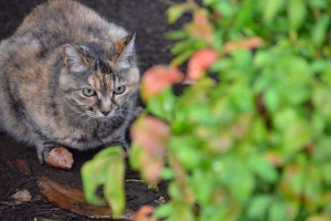 Cat and Autumn Leaves in July