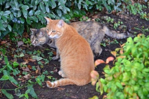 Cats and Autumn Leaves in July