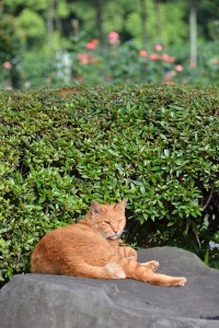 Cat On The Stone
